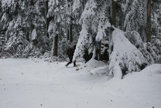 12/2012, dans la neige, forêt + urbain Dsc_0122