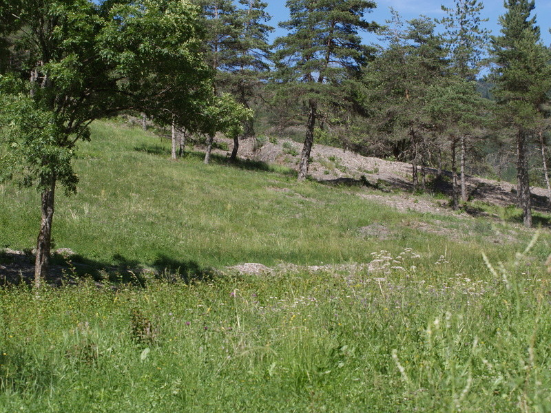 Vallée du Sasse - La Basse Combe (04) II P1010125