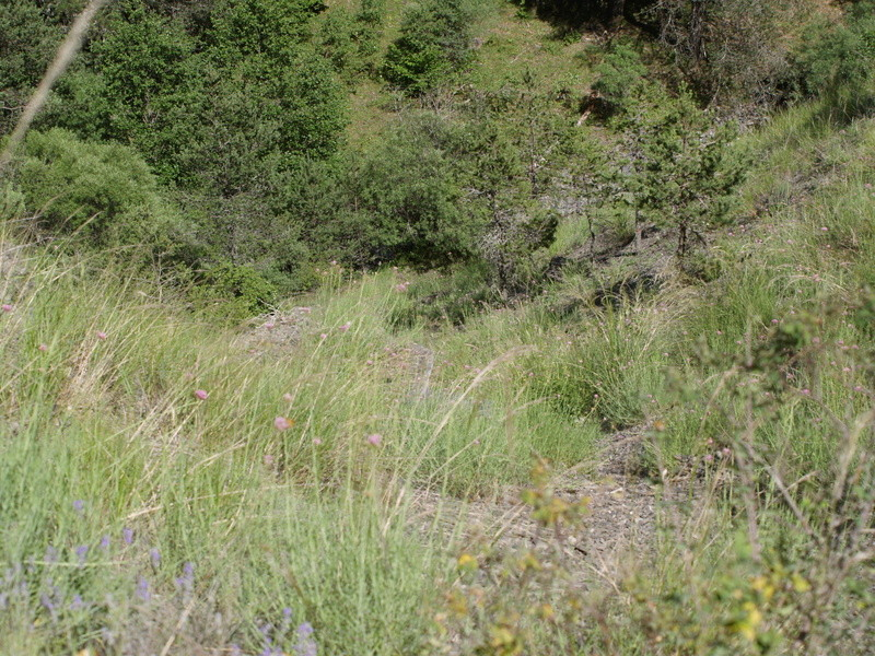 Vallée du Sasse - La Basse Combe (04) II P1010128