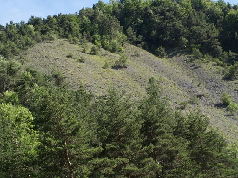 Vallée du Sasse - La Basse Combe (04) II P1010131