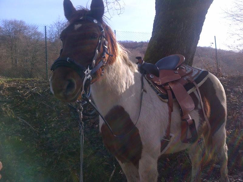 CALINOU  - ONC poney - né en 1999 - adopté en novembre 2012 par Stéphanie - Page 5 Notre-11