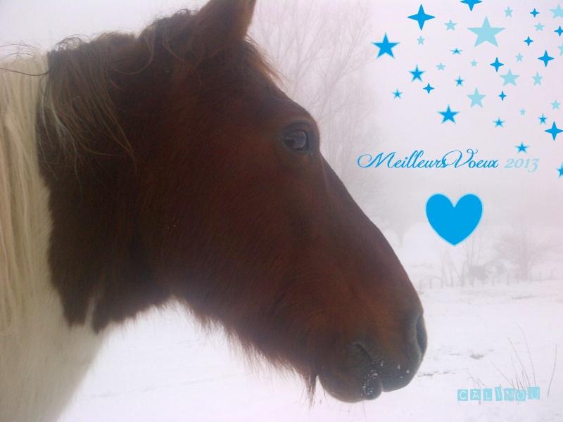 CALINOU  - ONC poney - né en 1999 - adopté en novembre 2012 par Stéphanie - Page 5 Voeux210