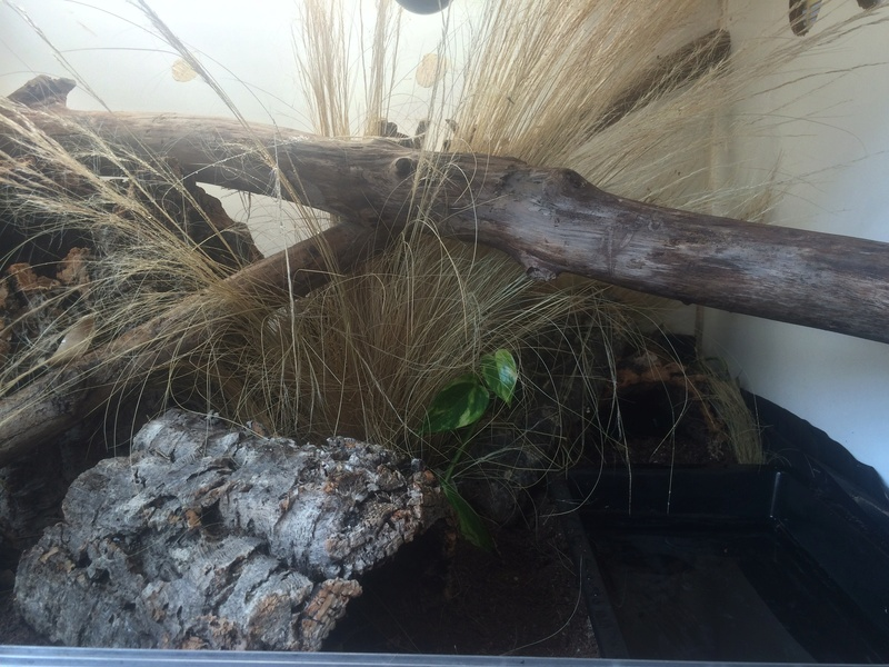Ma famille de reptiles ! - Page 13 Img_6912