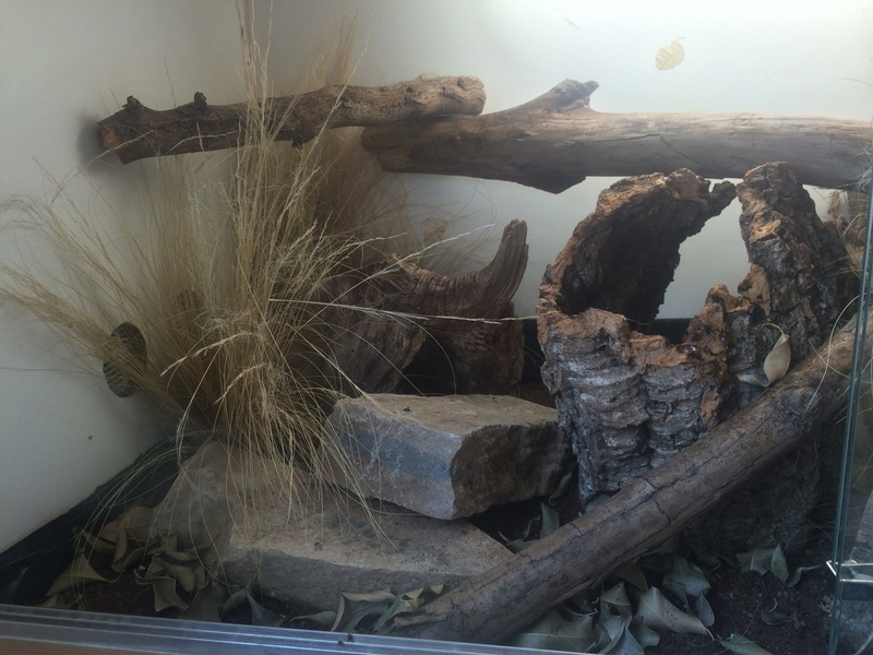 Ma famille de reptiles ! - Page 13 Img_6913