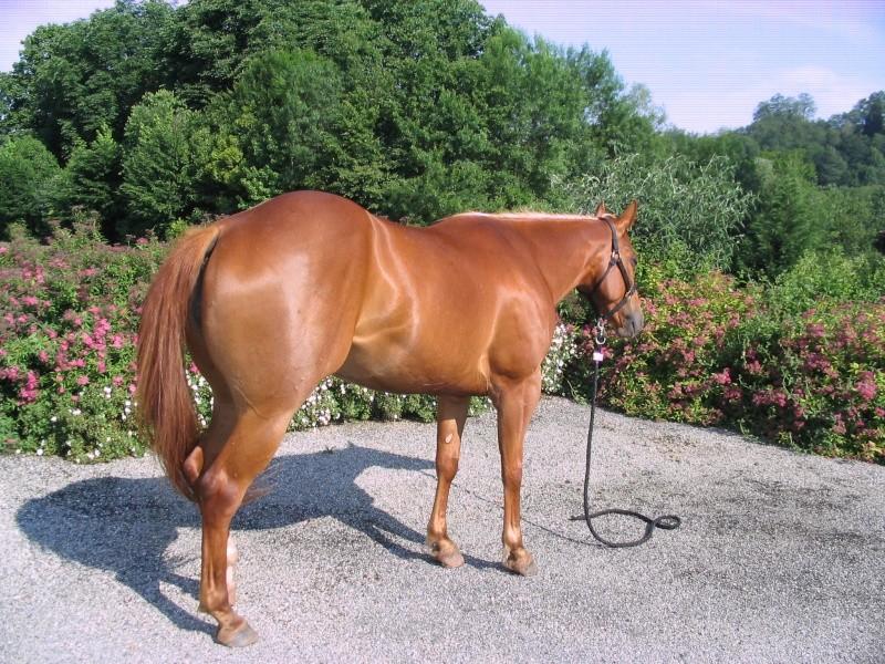 """Centre equestre western """"LA PALOUSE"""" st Cyprien 165_6510"""