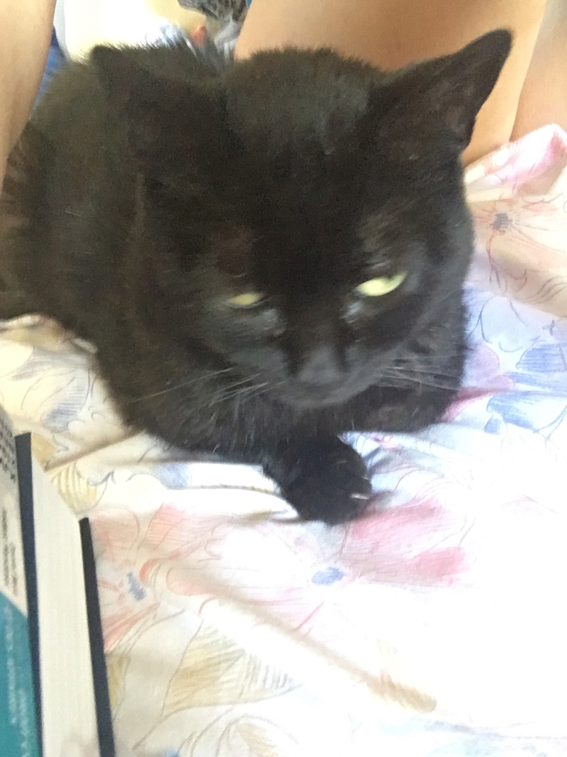 smilley - SMILLEY FIV+ INSUFFISANT RENAL 52205910