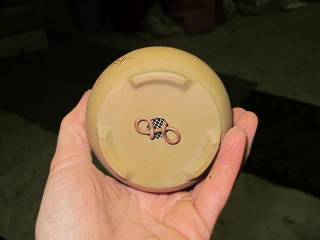 Come creare un mame da una talea di olmo cinese Znt5010