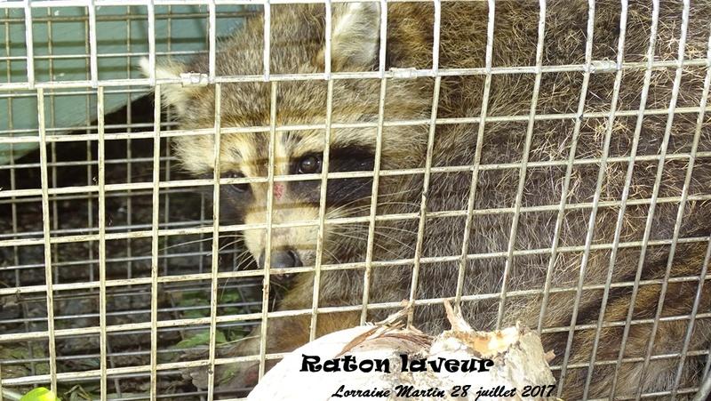 Raton # 02- Raton-13