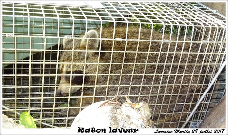 Raton # 02- Raton-15