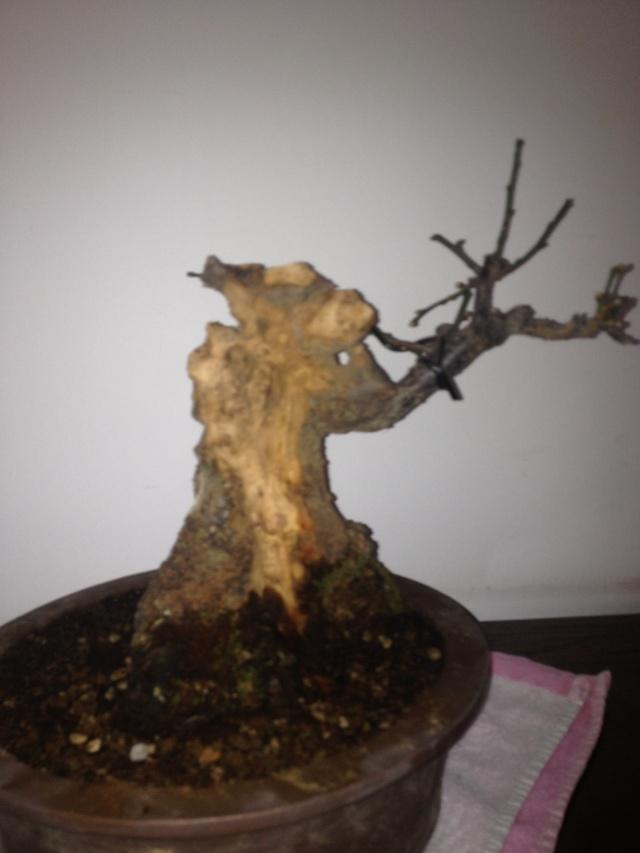 Prunus mume Img_1410
