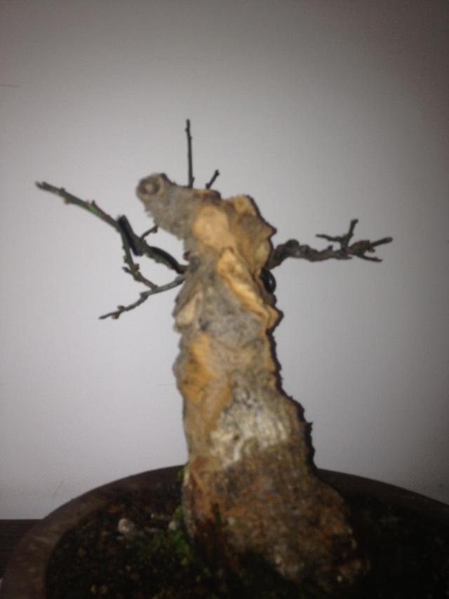 Prunus mume Img_1411