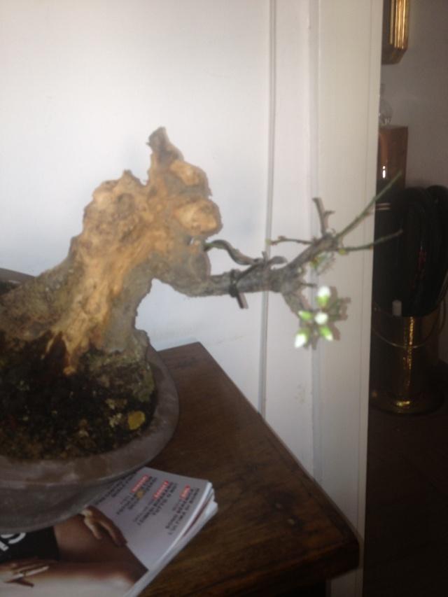 Prunus mume Img_1425