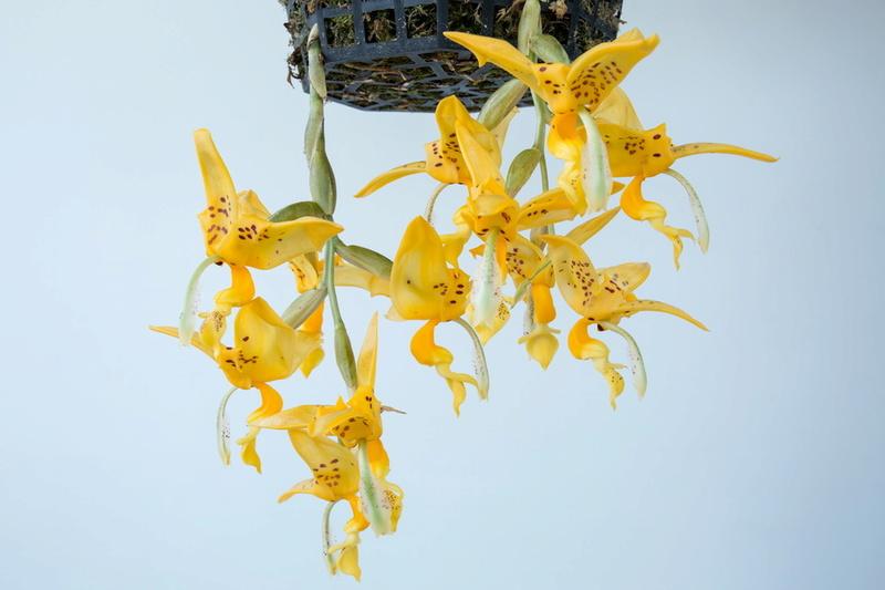 Une partie de mes orchidées... - Page 27 Img3_111