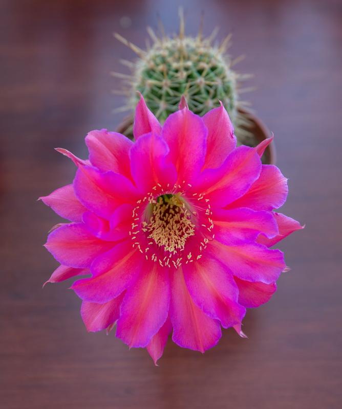Quelques cactus... Img3_117