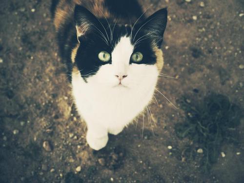 Katzengefärten Kittie11
