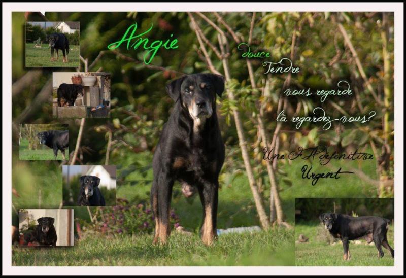 Angie, tu vas manquer à tout le monde... 64400810