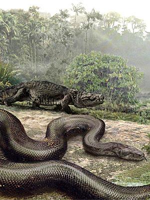 Anaconda Gigante Ana11
