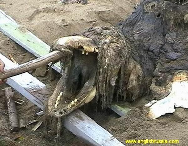 Criatura desconhecida encontrada em Sakhalin - Rússia (Super Post) Monste10