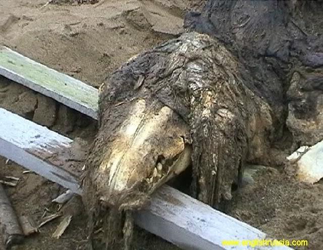 Criatura desconhecida encontrada em Sakhalin - Rússia (Super Post) Monste13