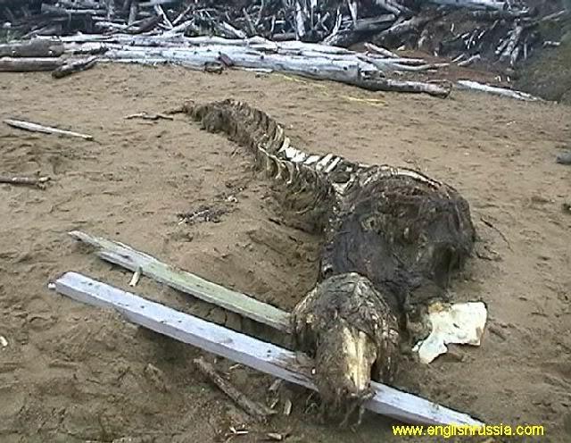 Criatura desconhecida encontrada em Sakhalin - Rússia (Super Post) Monste14