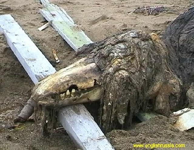 Criatura desconhecida encontrada em Sakhalin - Rússia (Super Post) Monste17