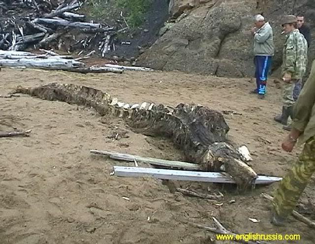 Criatura desconhecida encontrada em Sakhalin - Rússia (Super Post) Monste20