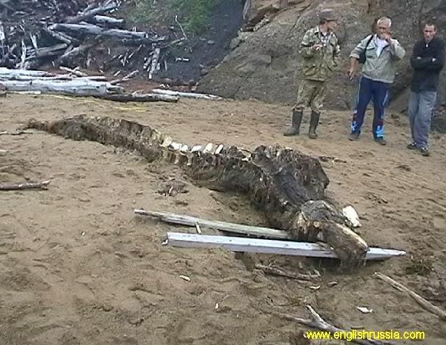 Criatura desconhecida encontrada em Sakhalin - Rússia (Super Post) Monste21