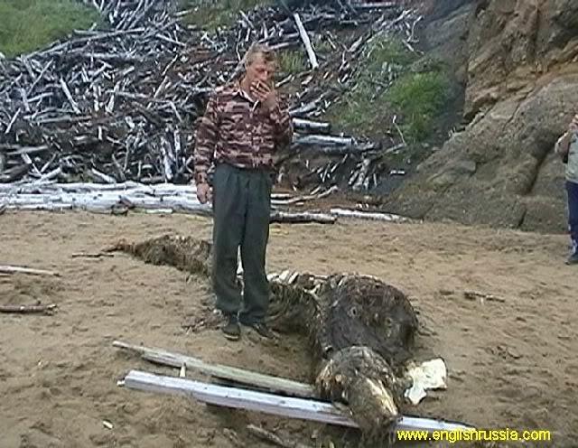 Criatura desconhecida encontrada em Sakhalin - Rússia (Super Post) Monste23