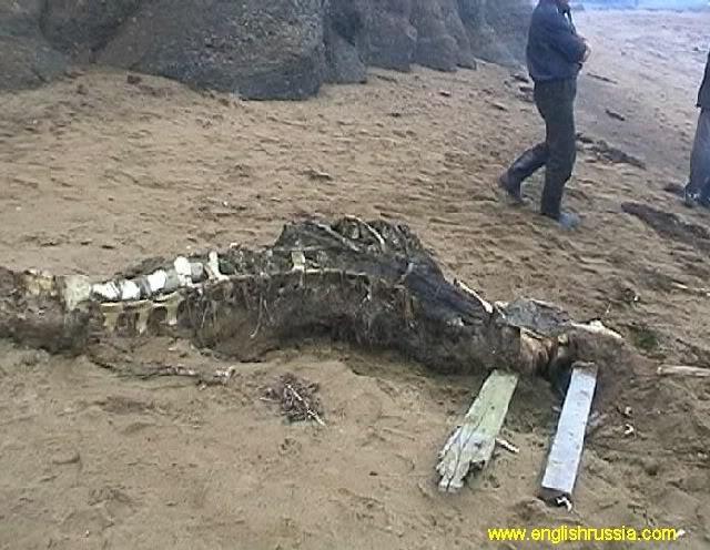 Criatura desconhecida encontrada em Sakhalin - Rússia (Super Post) Monste24
