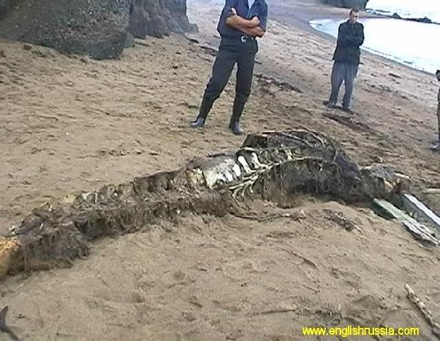 Criatura desconhecida encontrada em Sakhalin - Rússia (Super Post) Monste25