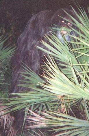 Skunk Ape Myakka10
