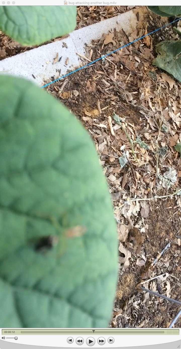 Bug/Pest Identification....Help! - Page 6 Spider10