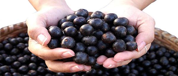 Açaï berry 212