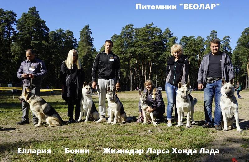 ВОСТОЧНО-ЕВРОПЕЙСКАЯ ОВЧАРКА ВЕОЛАР ЕЛЛАРИЯ - Страница 2 _dsc8714