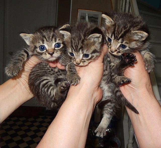 SOS 3 chatons Dscn6011