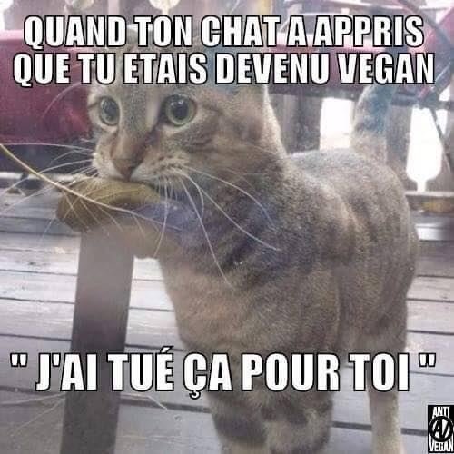 Special vegan !!!!  14725610