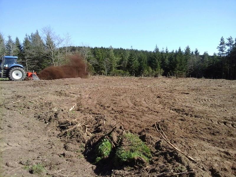 Seigle hybride re-semé après la récolte 17917410