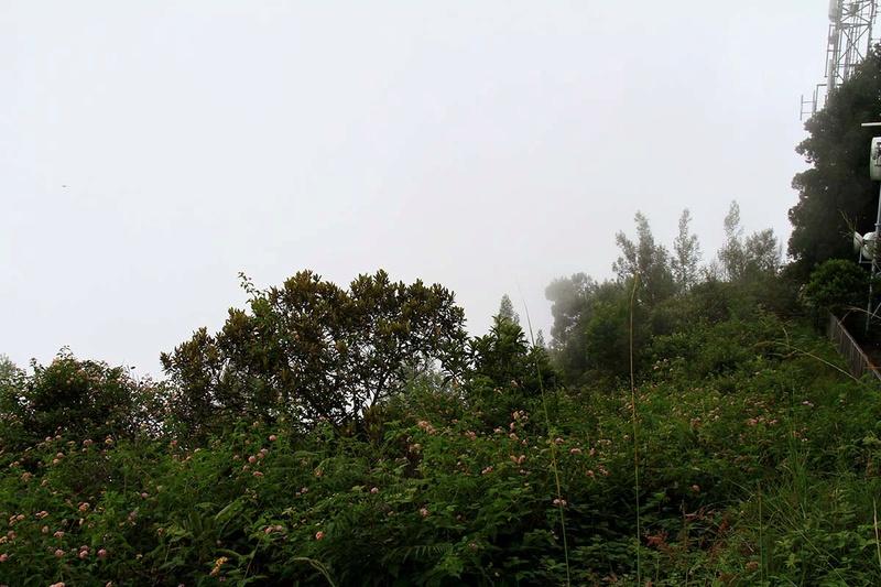 [fil ouvert] Balade à la Réunion  - Page 3 Img_8210