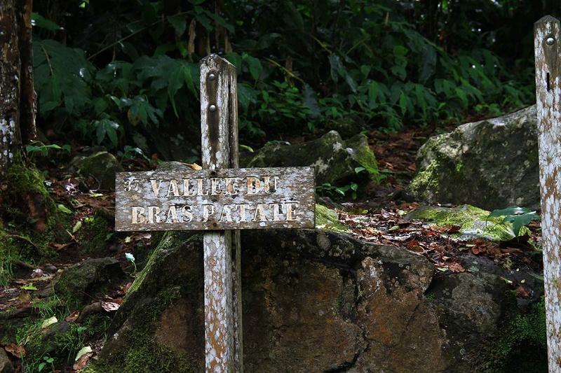 [fil ouvert] Balade à la Réunion  - Page 3 Img_8218