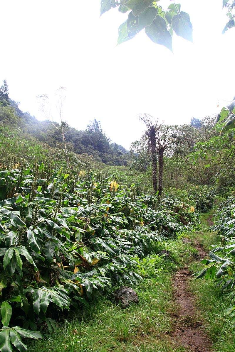 [fil ouvert] Balade à la Réunion  - Page 3 Img_8225