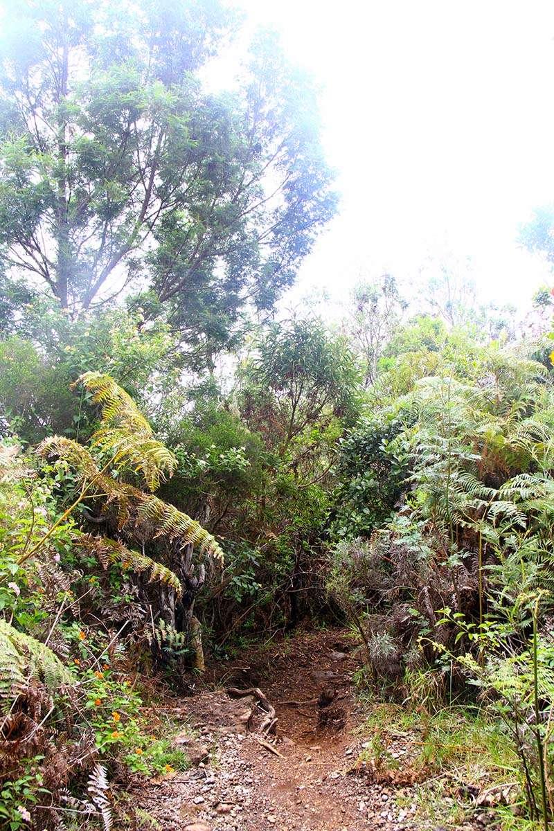 [fil ouvert] Balade à la Réunion  - Page 3 Img_8226