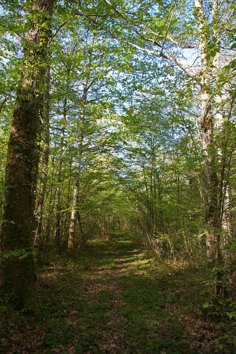 [fil ouvert] la forêt dans tous ses états - Page 14 Imgp2910