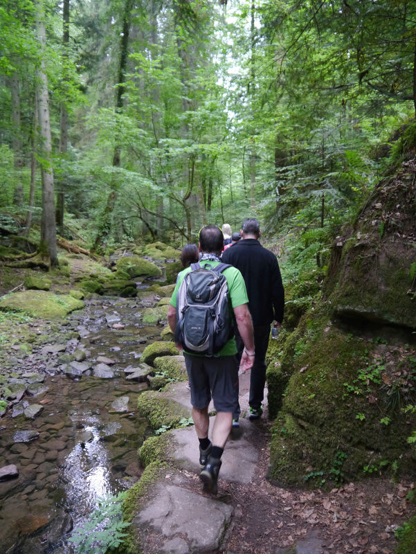 stowa - [Visite] Stowa - Balade en forêt noire P1040613