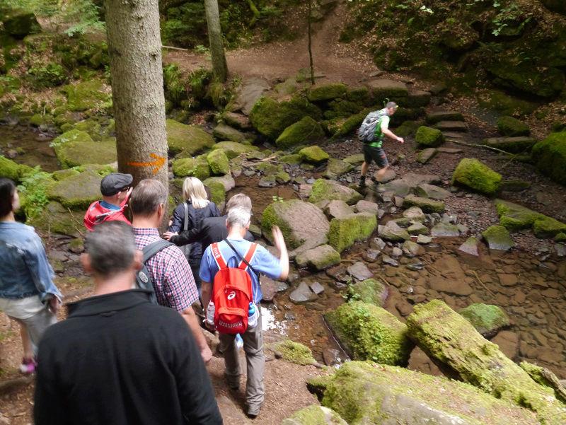 stowa - [Visite] Stowa - Balade en forêt noire P1040614