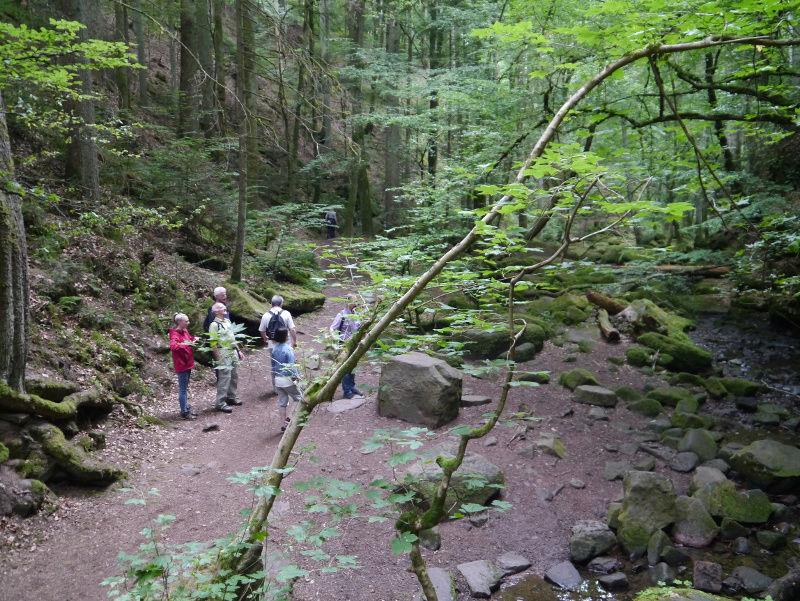 stowa - [Visite] Stowa - Balade en forêt noire P1040615