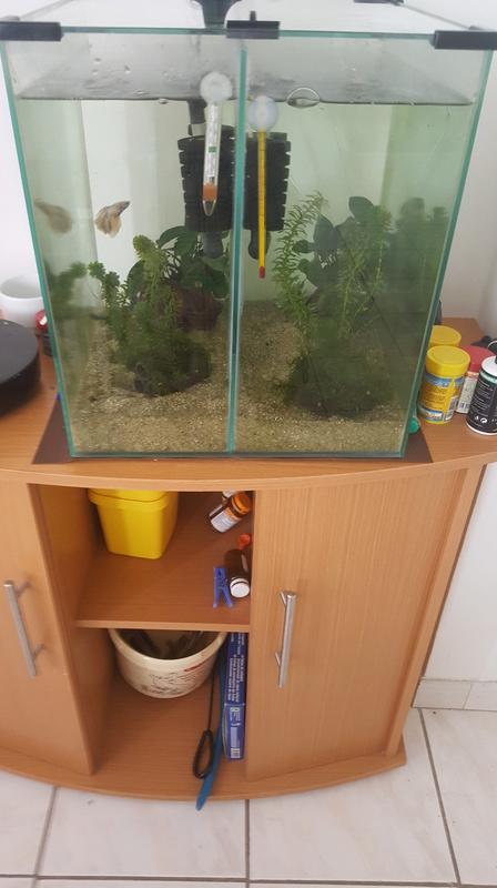 Mon aquarium pour mes 2 betta  20170810