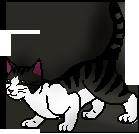 Cait's Kitty Profiles Badger11