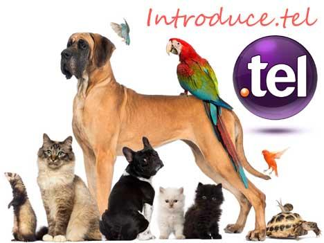 introduce.tel Introd10