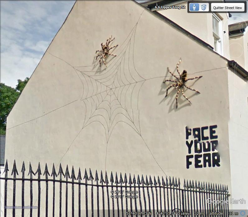 Araignée à Tenby - UK Www93