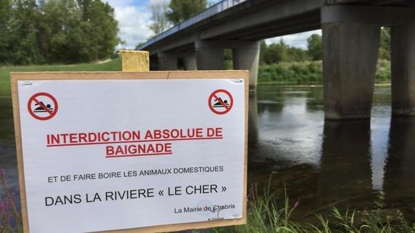 Trois chiens sont morts après s'être baignés dans la rivière Cher 20728110